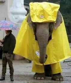 Elephant Wearing A Raincoat - SunnyLOL