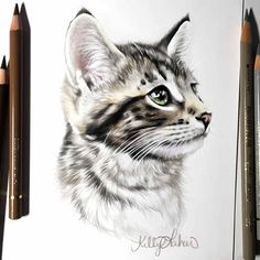 An unexpected portrait that came to my drawing table... RIP sweet little Dawson!  Our dear friends lost their kitty to cancer about a week before Christmas. So hard to live life without them, but he had a wonderful life on earth while he was with such an amazing family!  @j24silva #Dawson #kitty #portrait #fabercastell #laharstudios #drawing