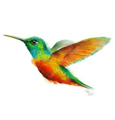 Colorful Hummingbird Watercolor Set of 4 Giclee Prints