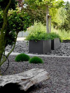 Garten | Vorgartengestaltung mit Pflanzkübeln