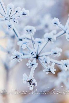 Winter flower.#RogersWinterWhites