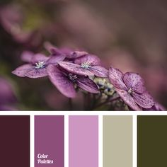 almost black, boggy, boggy green, eggplant, gray and purple, green and violet, olive color, purple, purple and gray, shades of eggplant color, shades of purple, shades of violet, very dark violet color.