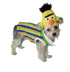 Sesame-street-bert-pet-costume  sc 1 st  Pinterest & sesame street costumes for dog they had these @ petsmart today for ...