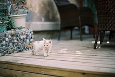 #cat #cute #outdoors #soft #dreamy #photography