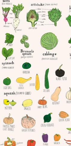 Detail from vegetables print by Julia Rothman