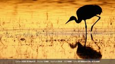 Canon: Bird Photography with Arthur Morris: One Shot and AI Servo AF