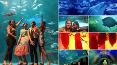 Enjoy the pictures from this fabulous event – we hope to sea you again next year! Ocean Aquarium, Africa Travel, Oceans, Two By Two, Events, Sea, Pictures, Photos, The Ocean