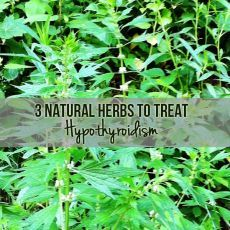 3 Natural Herbs To Treat Hypothyroidism