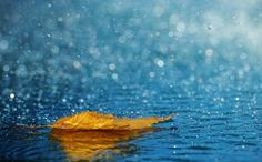 Imagem de rain, autumn, and leaves