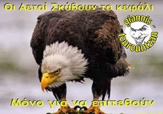 Bald Eagle, Bird, Humor, Quotes, Animals, Athens, Quotations, Animales, Animaux
