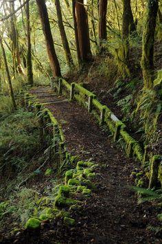 lori-rocks:  Mossy path, via pinterest