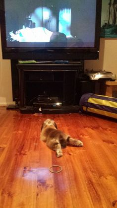 Sat down to watch Harry Potter. Our Rabbit seems to enjoy the movie as well... - Imgur