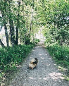 Country Roads, Dogs, Plants, Animals, Animales, Animaux, Pet Dogs, Doggies, Animal