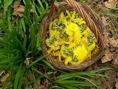 Health, Plants, Creative, Health Care, Plant, Planets, Salud