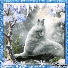 Blingee Winter | wolf in winter Fotografía #133965223 | Blingee.com