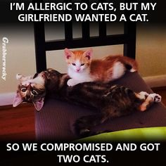 I'm allergic to cats.