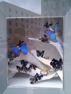 Butterfly Window Display on Rodeo (Blue)