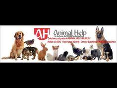 Rescates de ANIMAL HELP URUGUAY del 8, 16, 18, 20, 21, 22 y 23 de agosto...