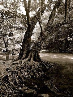 Immagini dalle cascate di Erawan