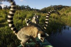 Geführte Rundreisen durch Madagaskar