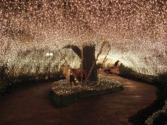 Fairy lights....magical!