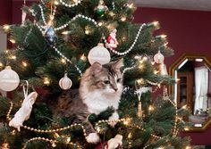 These 20 Cats in Christmas Trees Will Give You Life