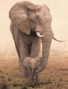 Elephants live in a matriarchal society in which the babies are loved and cared for by not only the mothers but by other females. Description from pinterest.com. I searched for this on bing.com/images