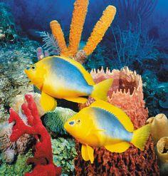 sea life - sea life photography - sea life underwater - sea life artwork - sea life watercolor sea l Underwater Creatures, Underwater Life, Ocean Creatures, Colorful Fish, Tropical Fish, Fauna Marina, Life Under The Sea, Beneath The Sea, Salt Water Fish