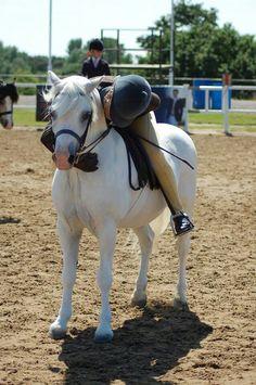 Welsh pony. This looks like vanity!