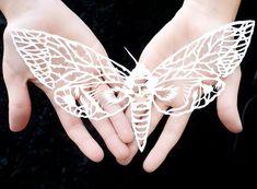 Papercut artwork paper sculpture Butterfly