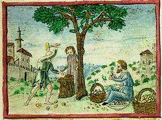 Almonds in Tacuinum Sanitatis (Vienna, cod.Vindoboniensis 2396)