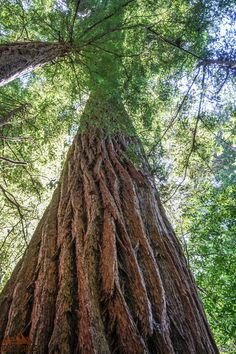 Be astounded by Redwood National Park! See the spectacular coastline and the tallest trees in the world with this guide written by a former park ranger! California National Parks, California Travel, Beautiful Places In California, Hiking With Kids, Best Hikes, Road Trip Usa, Go Camping, Dream Vacations, Trip Planning