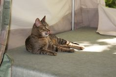 Kitty on a camping trip!  #camperrenovation, #traveltrailerremodel, #camperremodel, #traveltrailerrenovation
