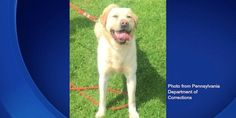 Totti was a 2-year-old yellow lab training in drug detection, now she is dead because her handler left her in a hot car for over two and a half hours (137126 signatures on petition)