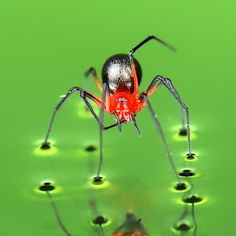 by CK Jack - Animals Insects & Spiders Cool Insects, Bugs And Insects, Spiders And Snakes, Scary Spiders, Cool Bugs, Itsy Bitsy Spider, A Bug's Life, Beautiful Bugs, Tier Fotos