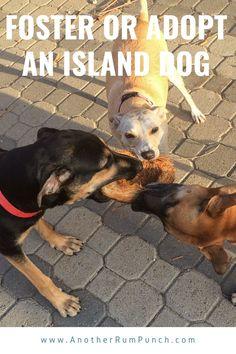 My story of fostering a dog in Aruba! Aruba Island, The Fosters, Caribbean, Adoption, Dogs, Fun, Life, Animals, Animales