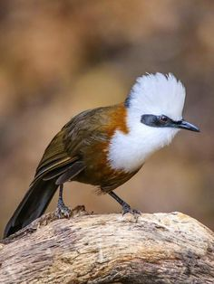 Wild Bird Trust presents the Top 25 Birds of Asia. Out of all the continents, Asia has one of the highest bird diversities, particularly in India and Rare Birds, Exotic Birds, Colorful Birds, Animals And Pets, Baby Animals, Cute Animals, Pretty Birds, Beautiful Birds, Crazy Bird
