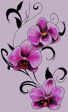 Orchids  High quality art print.  Ink and Colored Pencil on Paper.  6 x 10 inches.