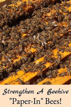 Learn how extra bees can successfully be added to a beehive to strengthen it for winter.