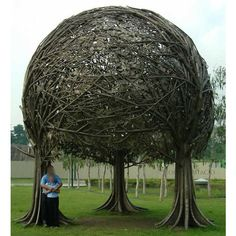 """Previous pinner: """"A unique tree with braided branches in an unusual arboretum. This is an amazing nature picture, strange landscaping structure, and weird park pic. Eco Deco, Weird Trees, Tree Braids, Tree Canopy, Beach Canopy, Window Canopy, Backyard Canopy, Canopy Lights, Canopy Outdoor"""