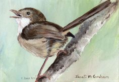 Red Backed Fairy Wren ACEO Bird Wildlife Original Australian Bird ACEO Painting