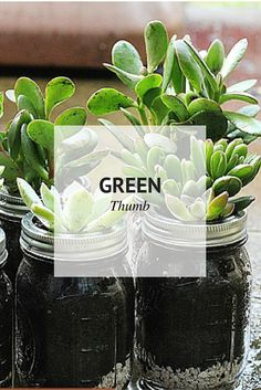 Green Thumb | Plants - Indoor and Outdoor | Sophistishe.com