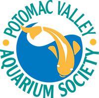 Aquarium Use of Potassium Permanganate Aquarium Maintenance, White Tea Cups, Aquarium Setup, Signs Of Stress, Water Quality, Drinking Water