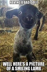 Bad Day Funny Animal Memes Funny Animal Photos Happy Animals Cute Animals