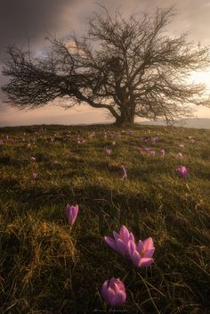 spring by Mirco Tamenghi on 500px