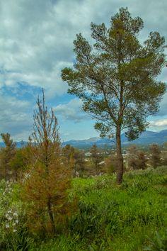 February 25 – Photos from walks. Photo Walk, Rainy Weather, Argos, Sunny Days, Greece, Nature, Plants, Photos, Photography