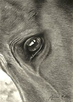 up close and personal by Glynnis Miller Pencil ~ 7 x 5