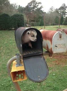 wish this was my mailbox at college