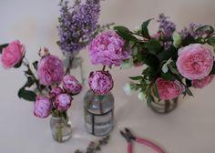 FLOWER-FRIDAY-LILAC-1