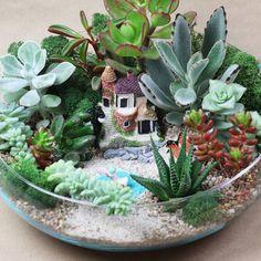 Mini Cactus Garden, Fairy Garden Plants, Garden Terrarium, Succulent Terrarium, Bedroom Plants Decor, Plant Decor, Garden Pond Design, Tulips In Vase, Miniature Fairy Gardens